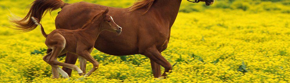 Paardennamen.nl